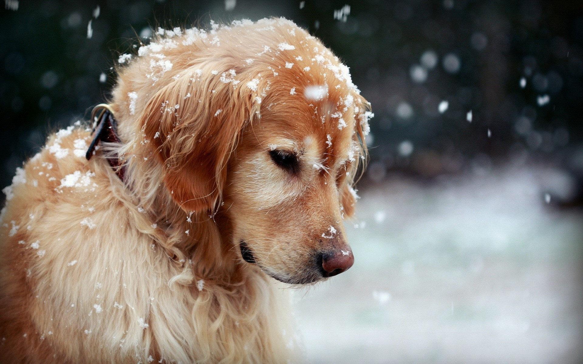 Winter Dog Snowflakes