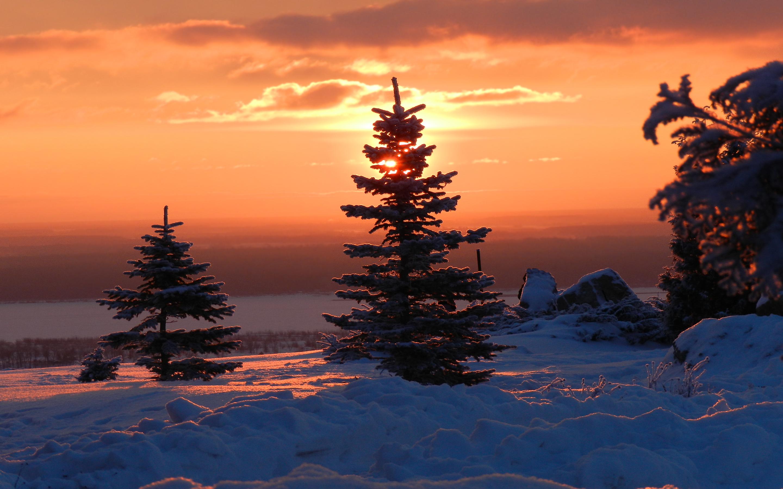 Winter fir trees sunset
