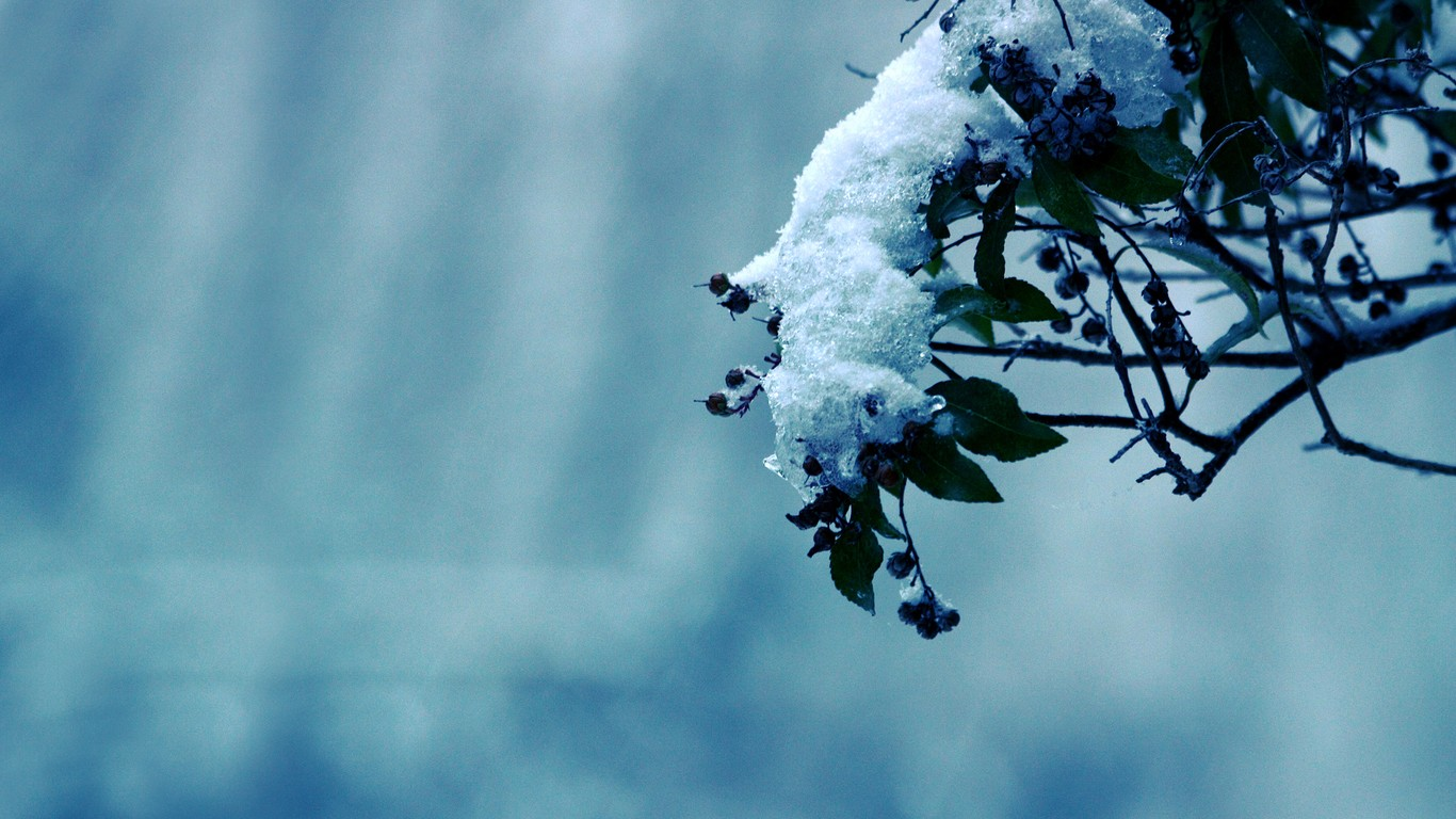 Winter Flower 25810 1366x768 px