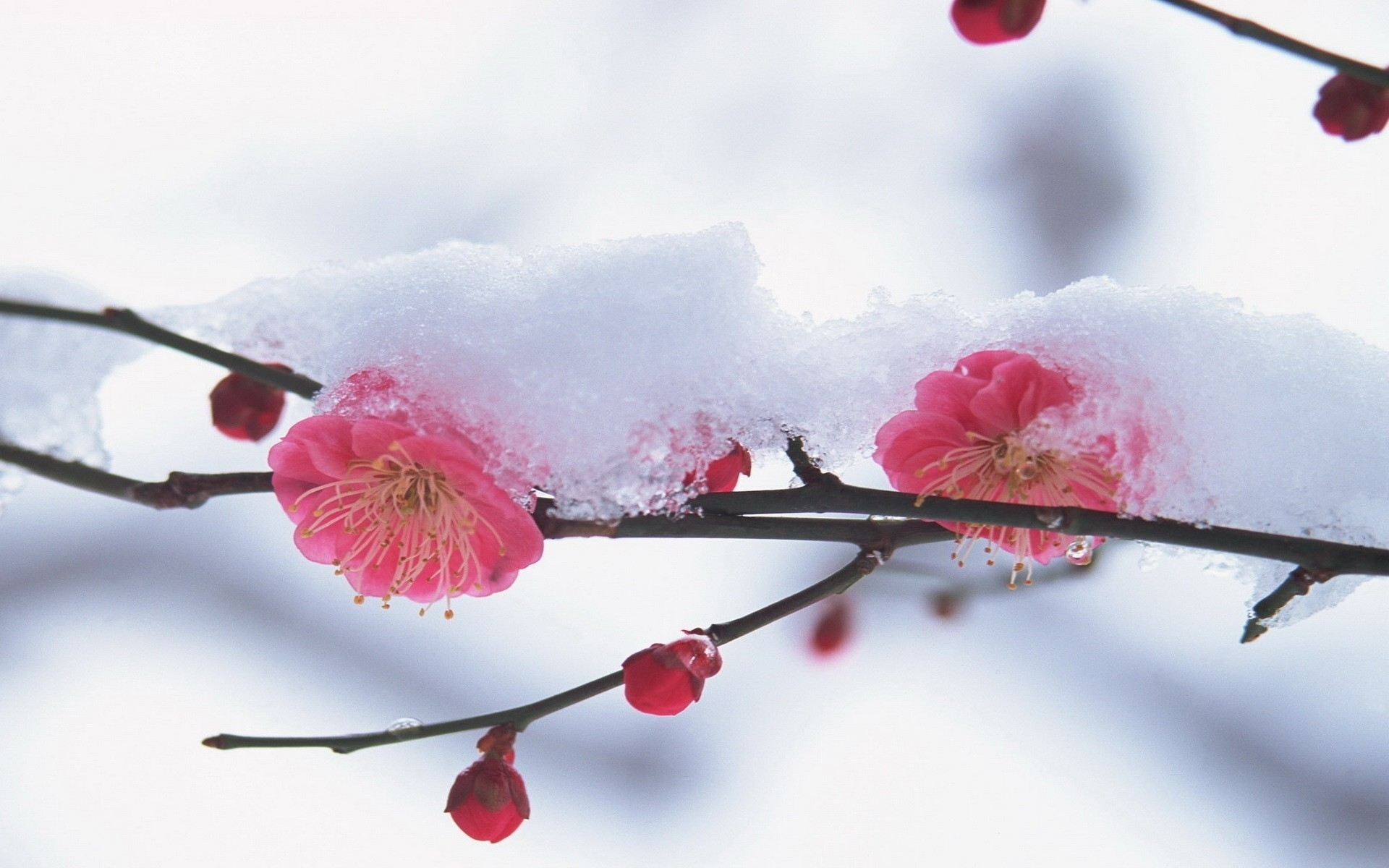 Winter Flower Wallpaper 1920x1200 66784