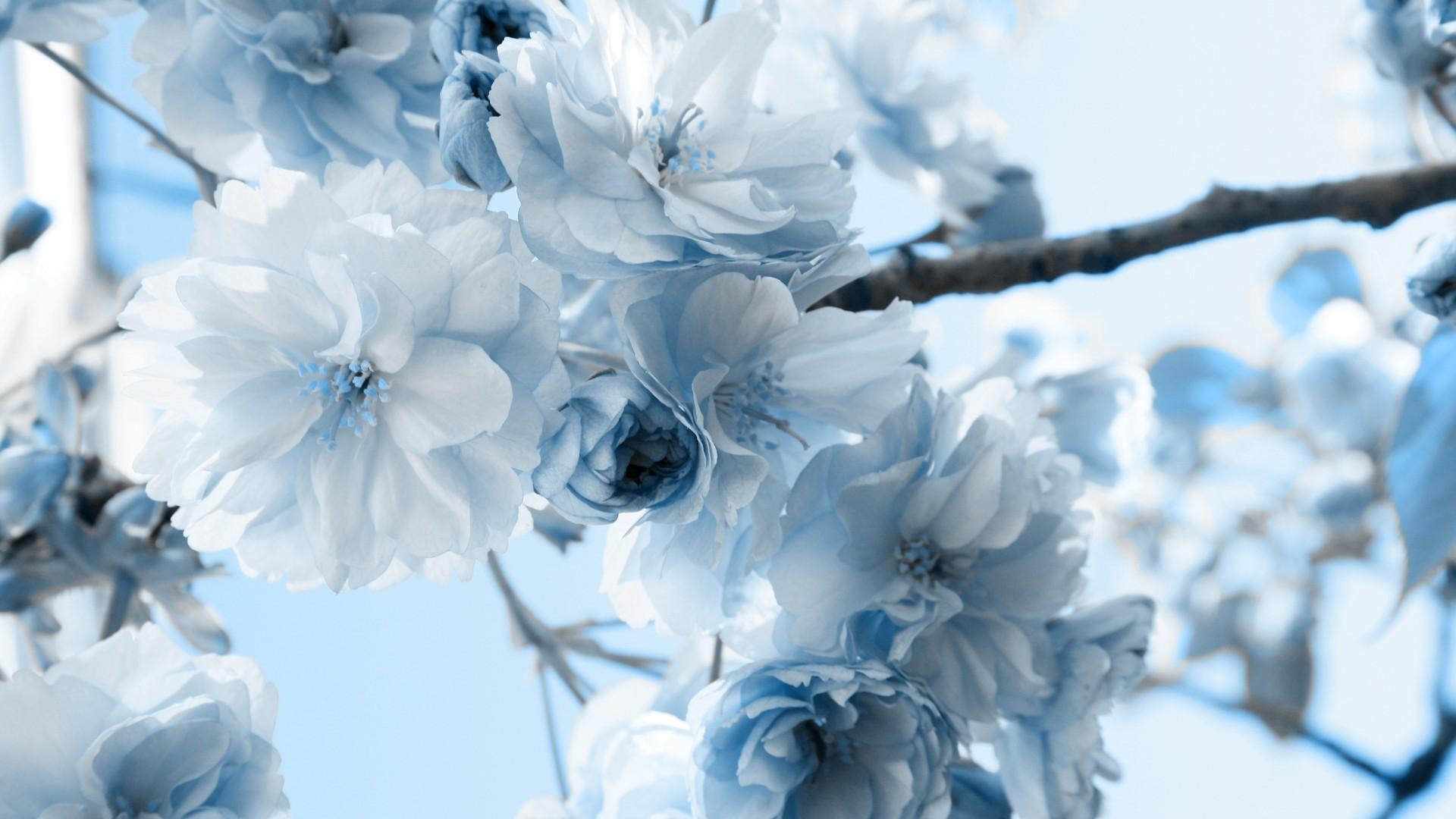 Winter Flowers Wallpaper Hdwidescreenscom