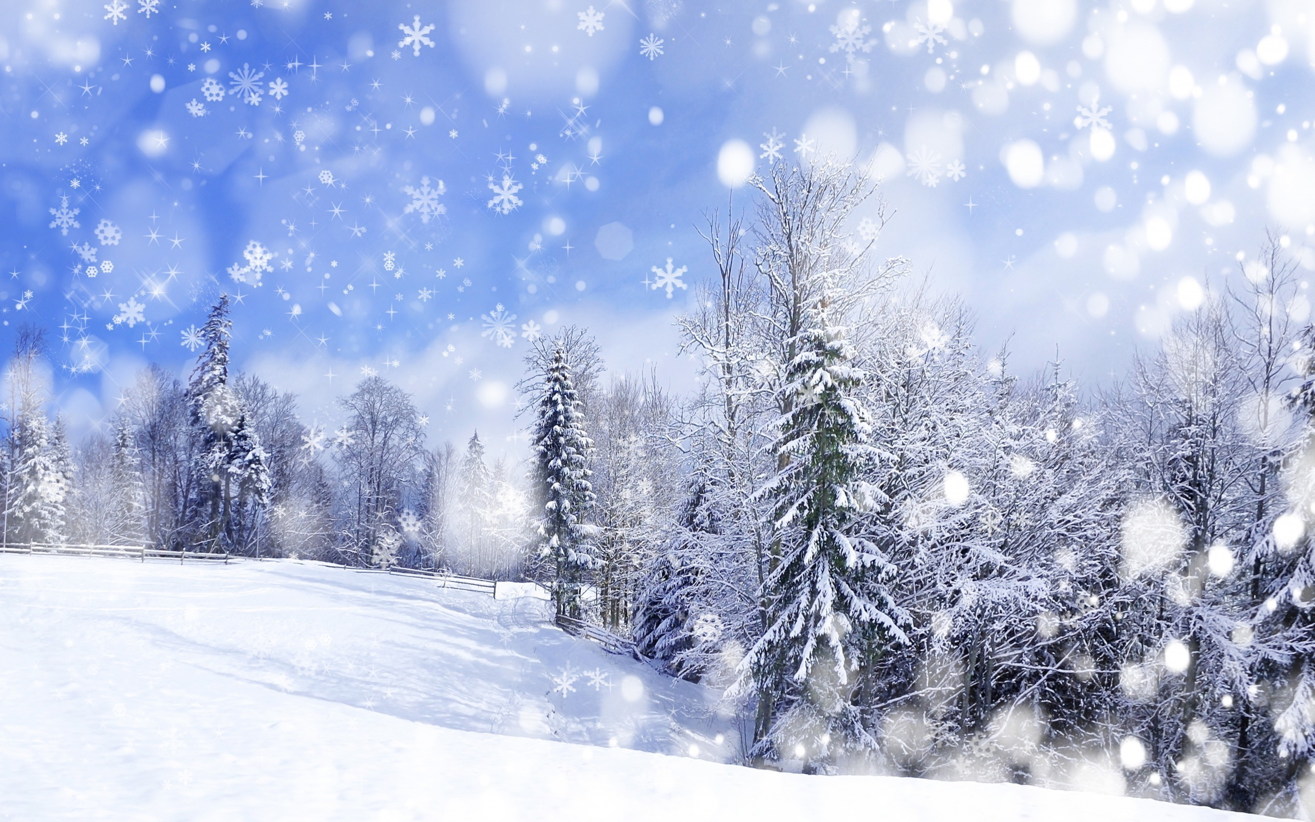 Winter forest scenery