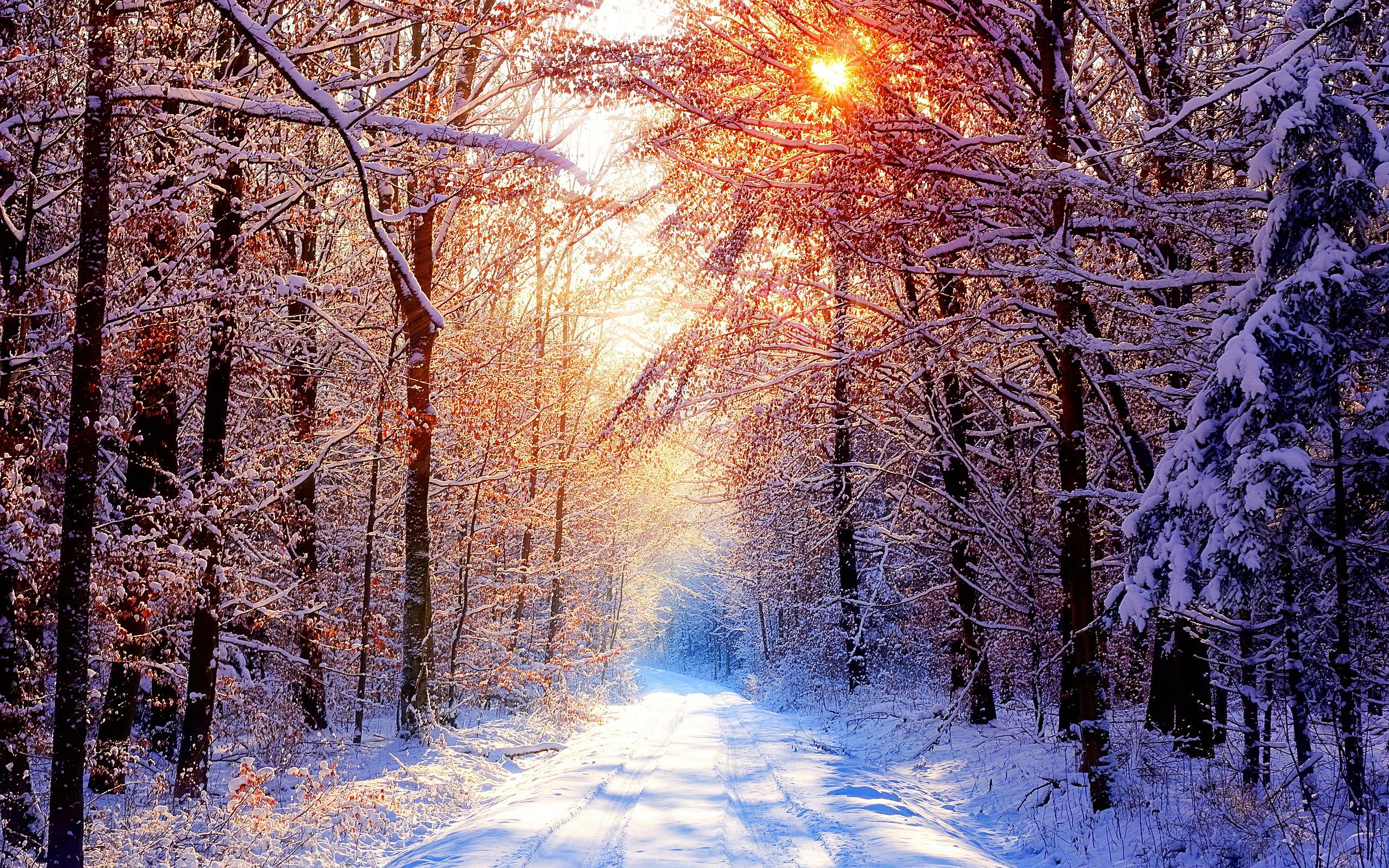 Winter Morning Forest Wallpapers Pictures Photos Images. «