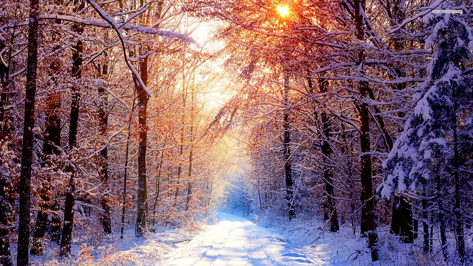 Winter Road Wallpaper