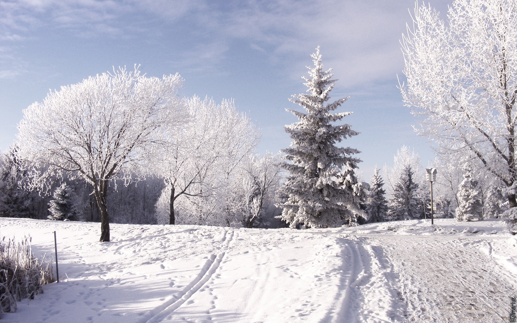 Winter Beautiful Wallpaper