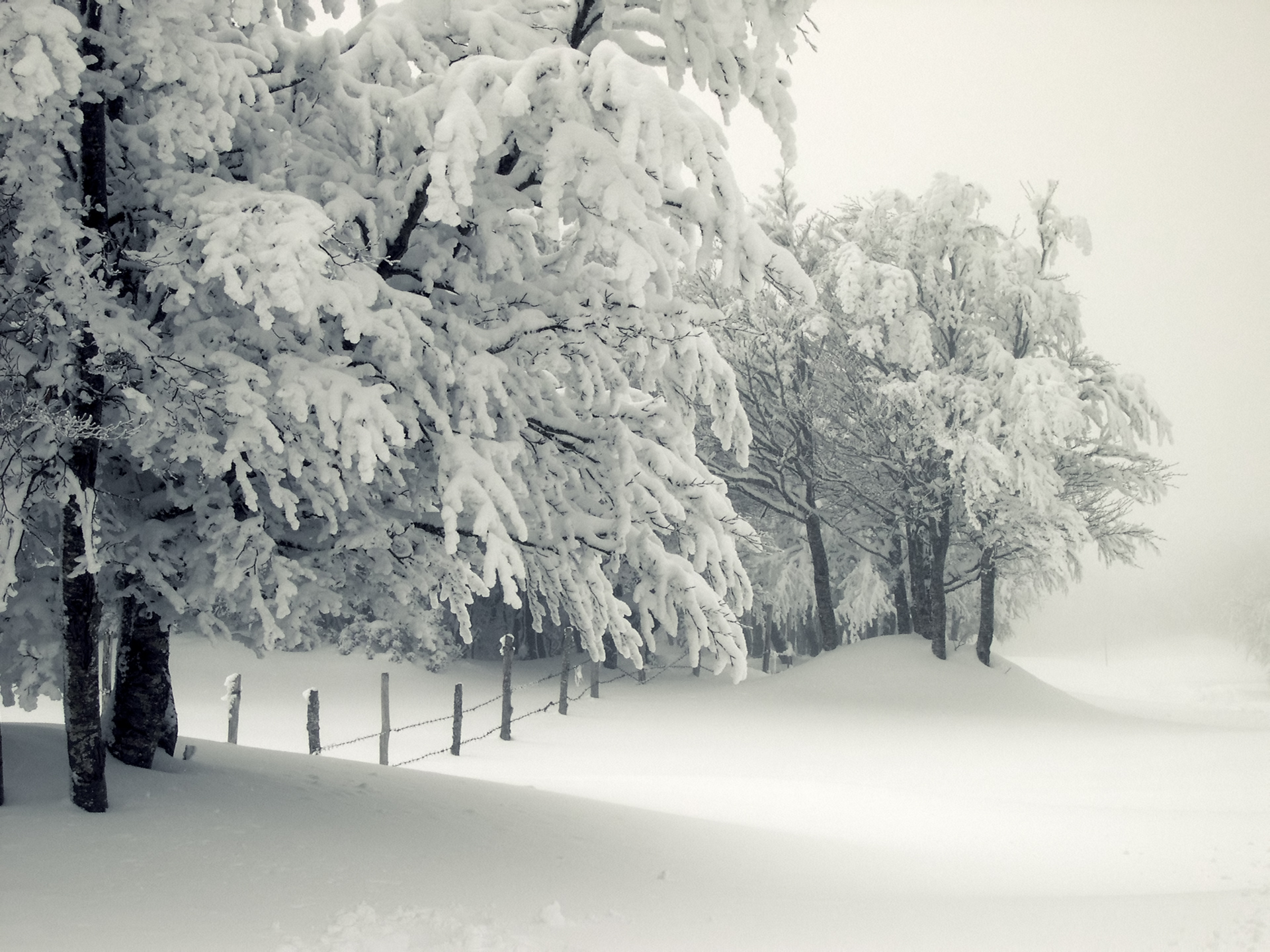 Seasons Winter Snow Trees Branches Nature Wallpapers and photos