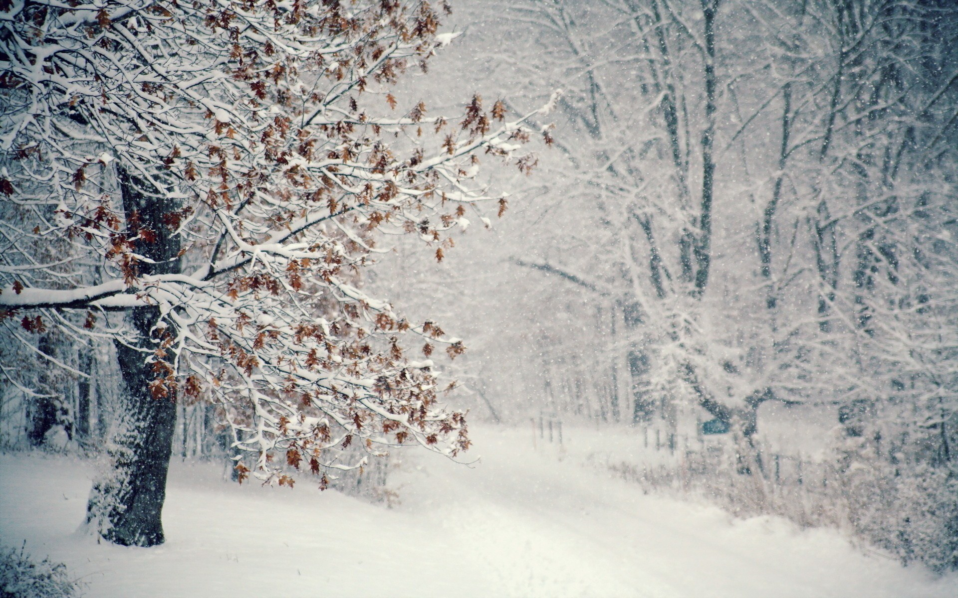 Forest Nature Winter Snow Snowflakes Photo HD Wallpaper