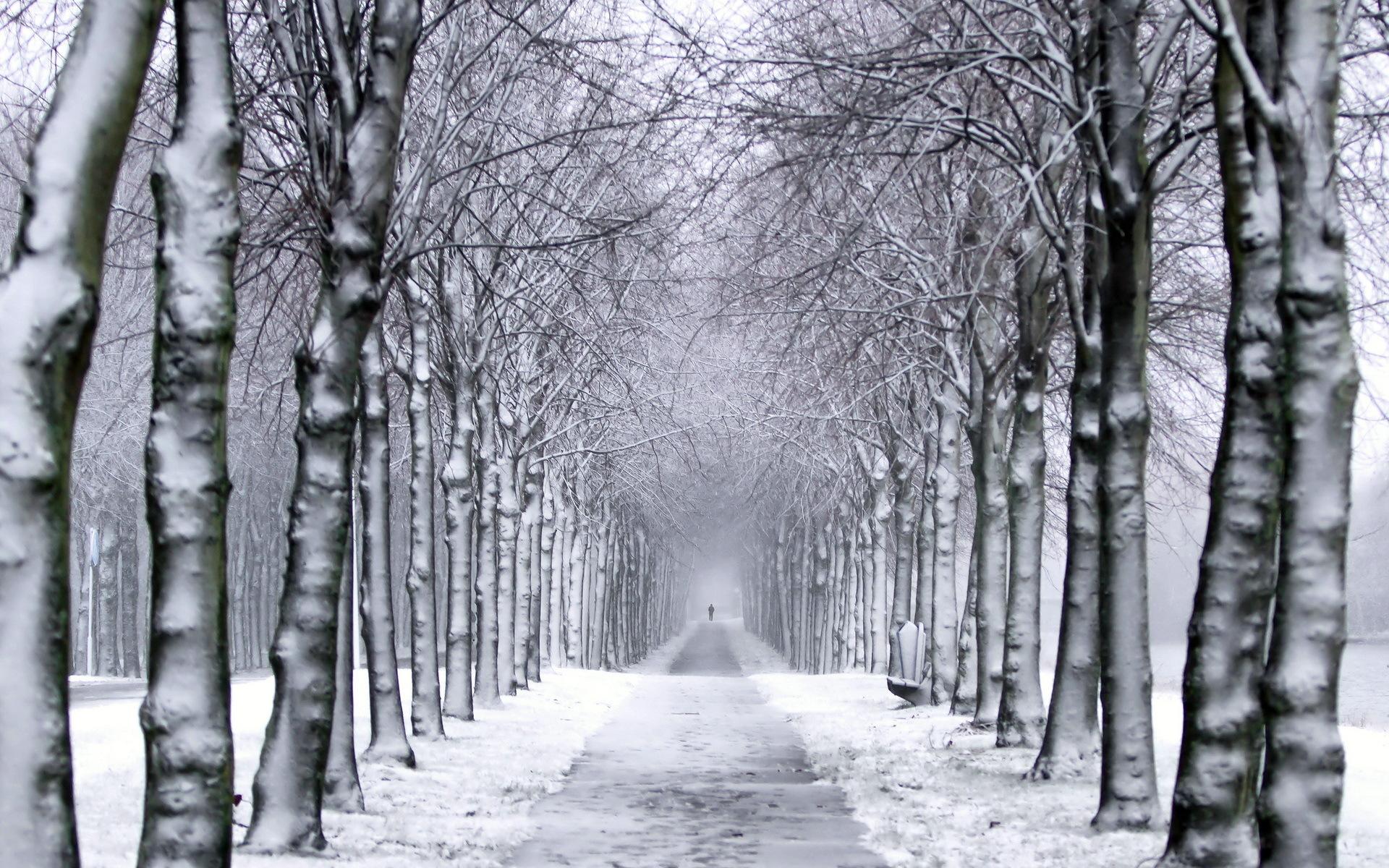 Winter Trail Wallpaper