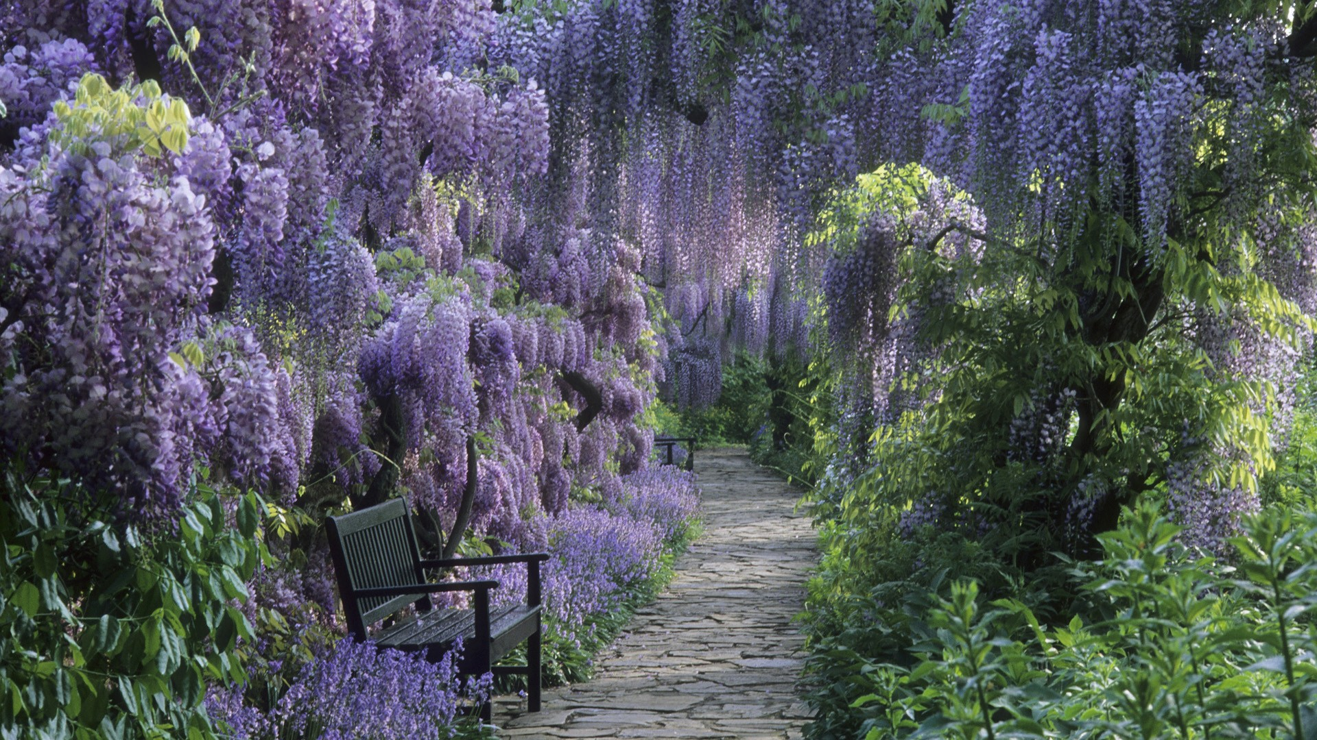 1920x1080 Germany Wisteria wallpaper