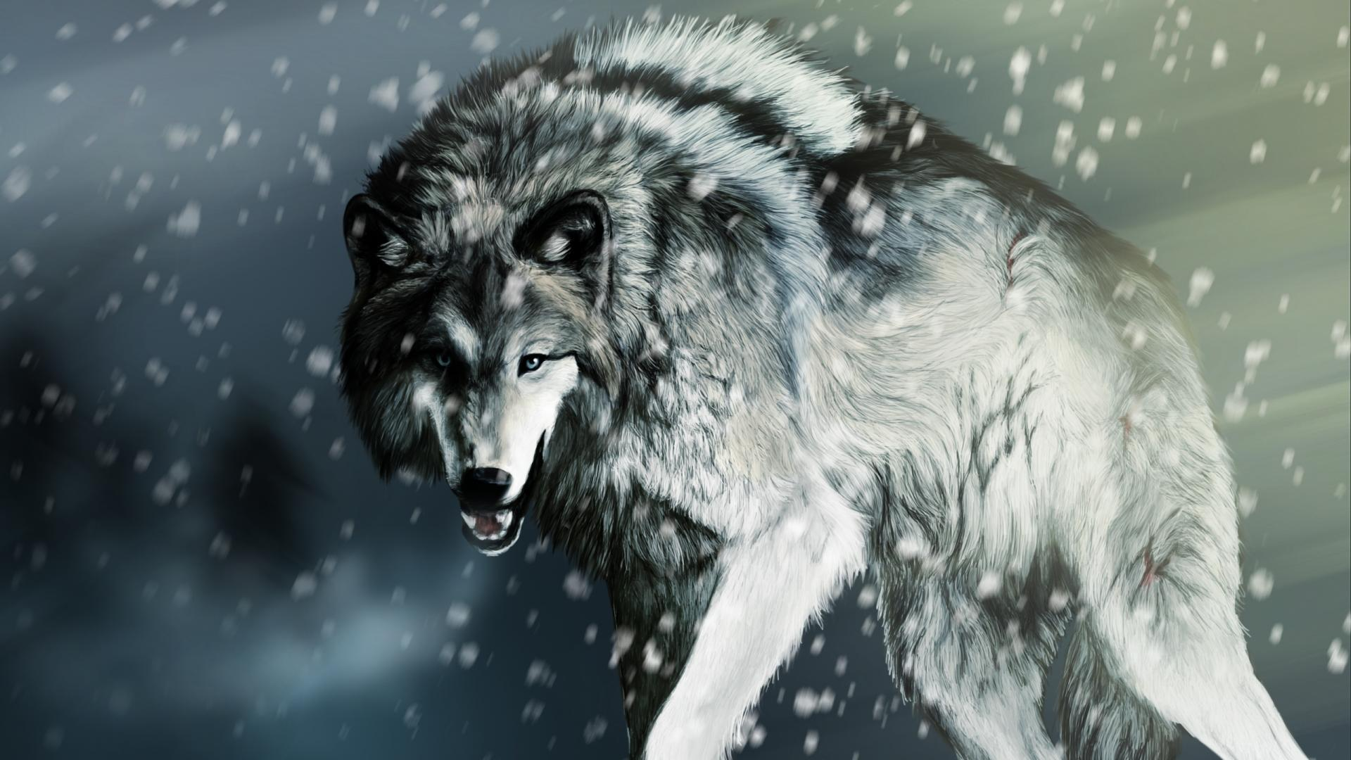 Wolf wallpaper 1920x1080 40969