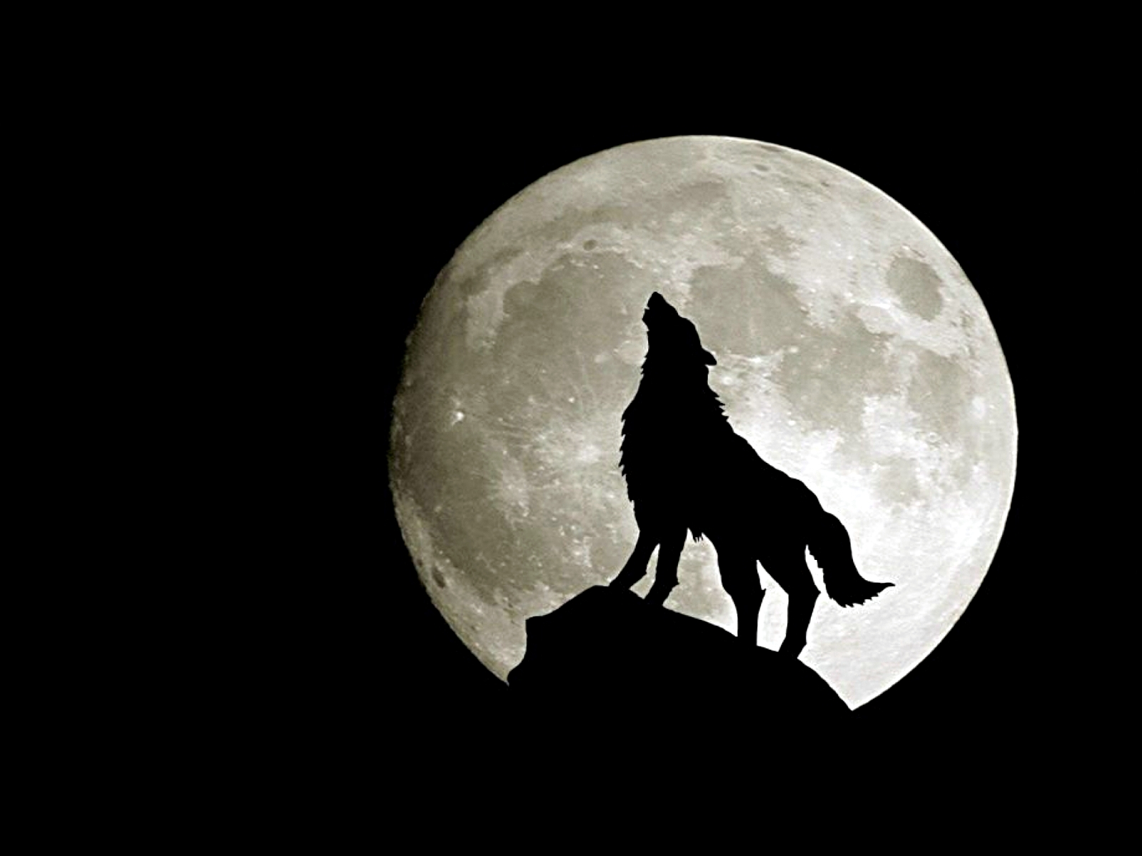 Animals Wolf Wallpapers Wolf Backgrounds Images Wolf Wallpaper