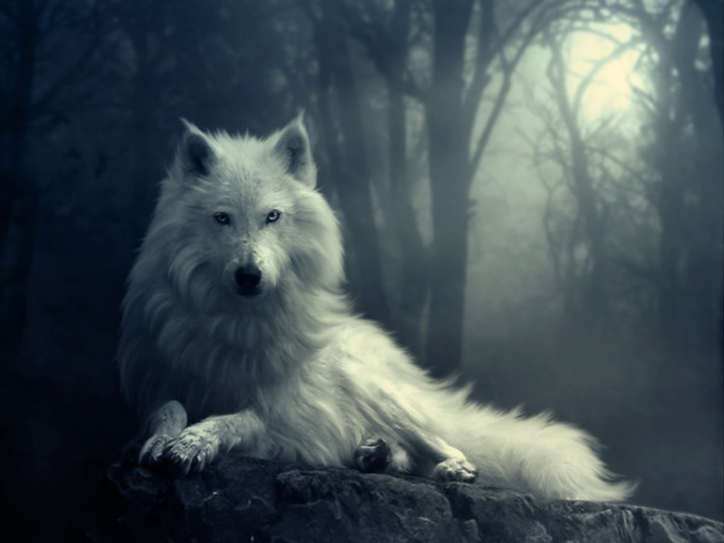 ... Wolf Wallpapers and Backgrounds 04 ...