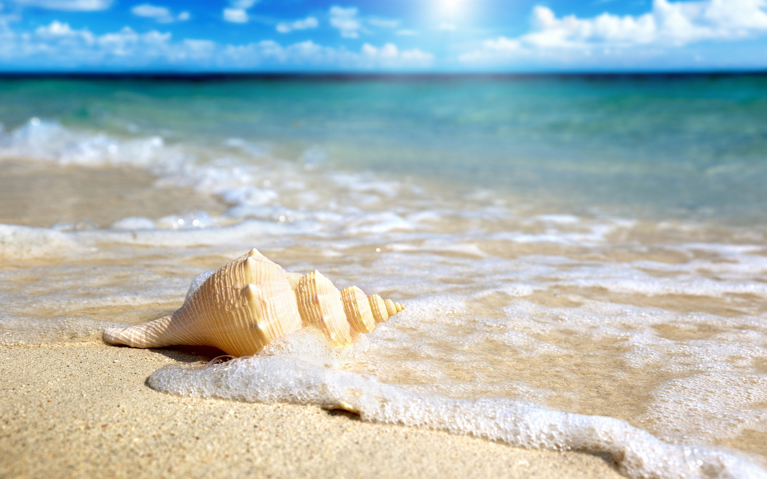 Wonderful Beach Shell Wallpaper