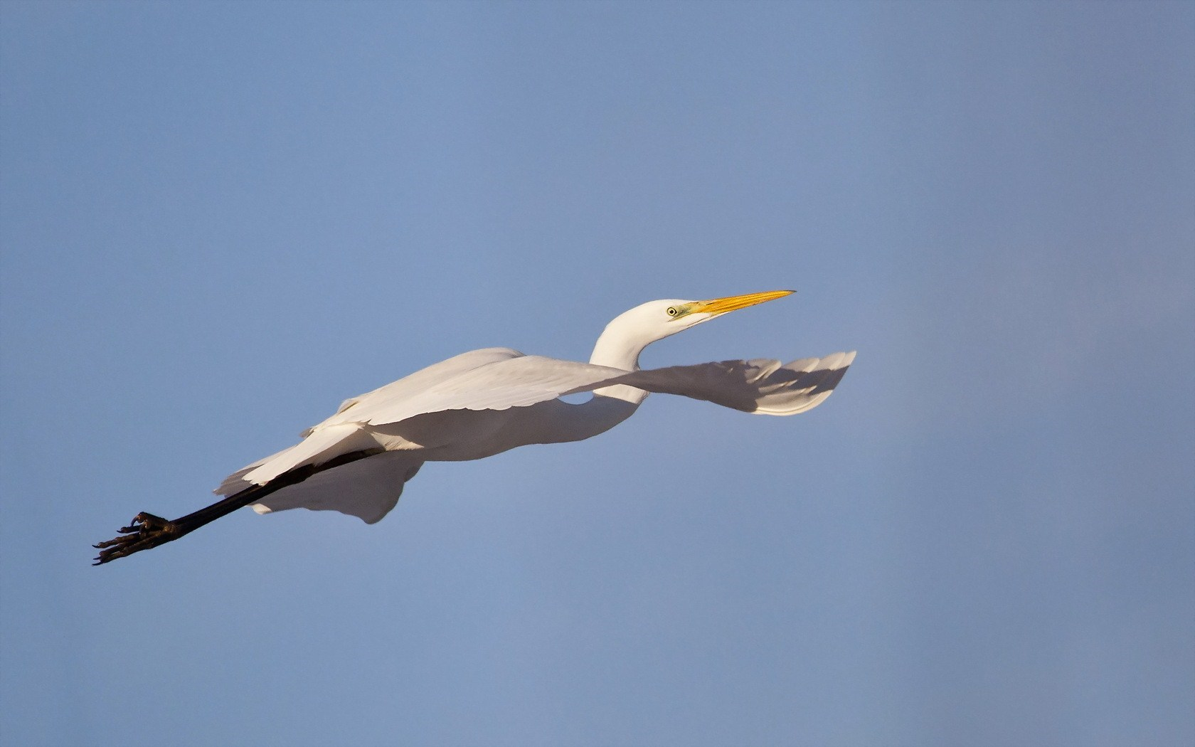 Wonderful Bird Egret