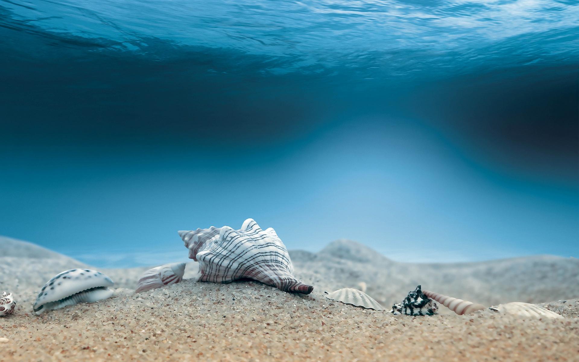 Wonderful Shells Wallpaper