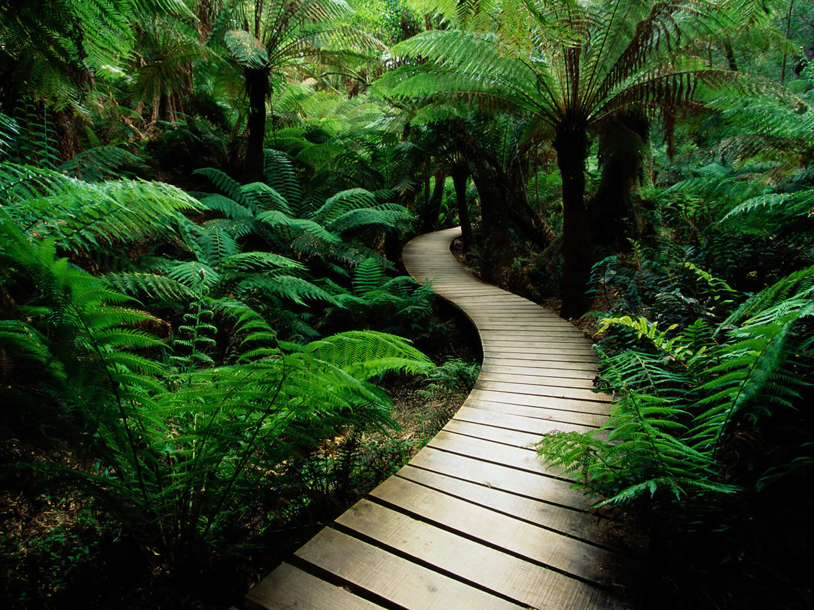 wooden path top hd wallpapers