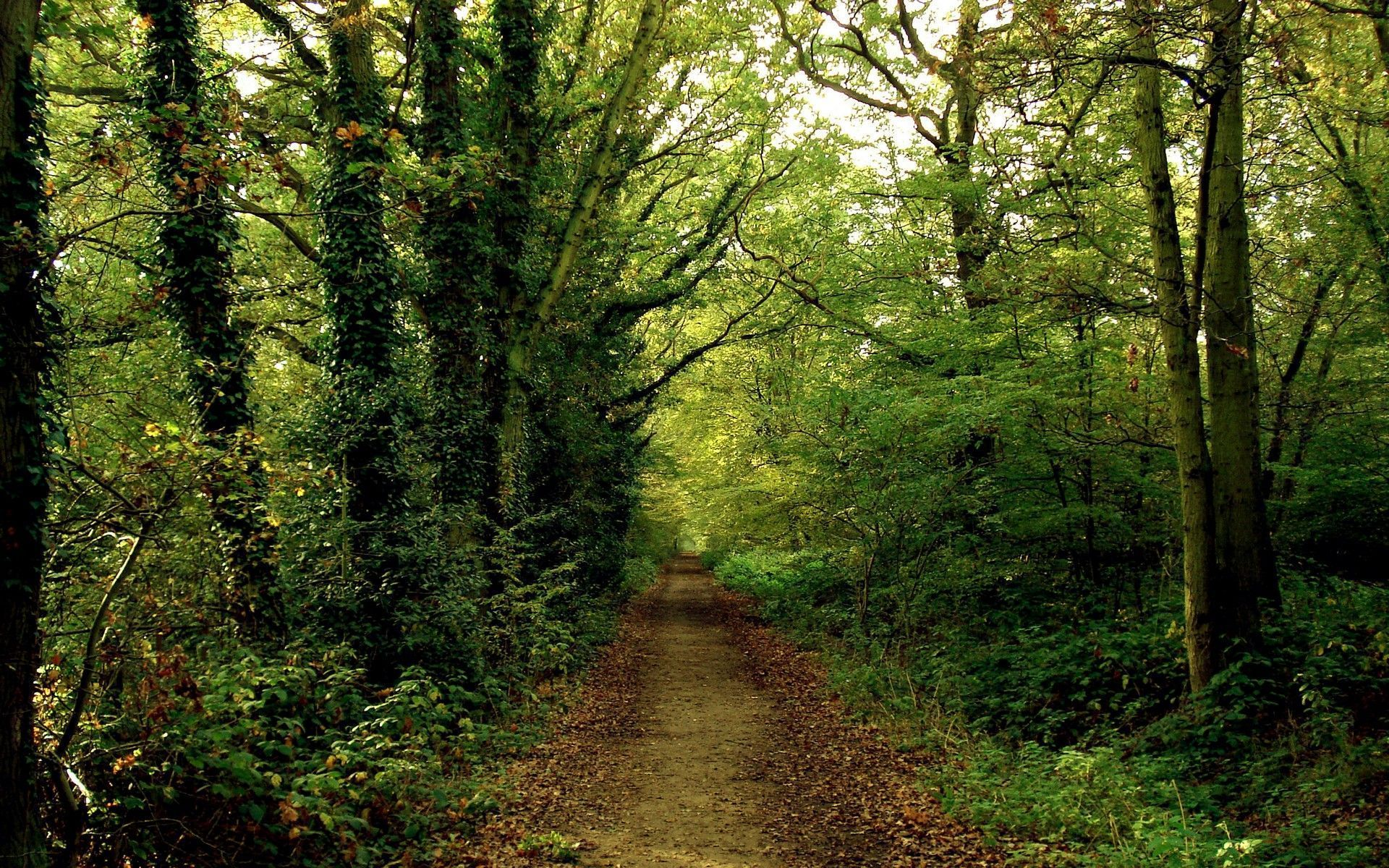Woods Background