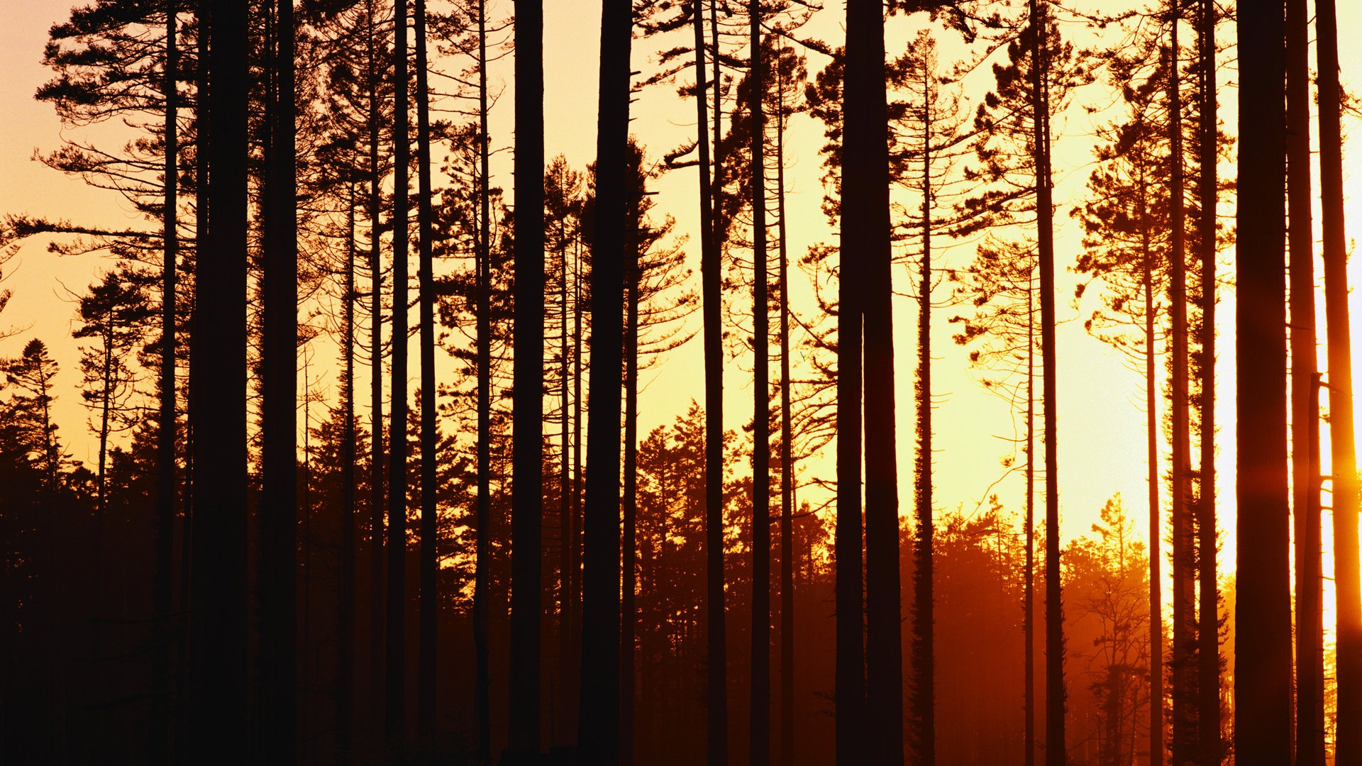 Woods Sunset Wallpaper