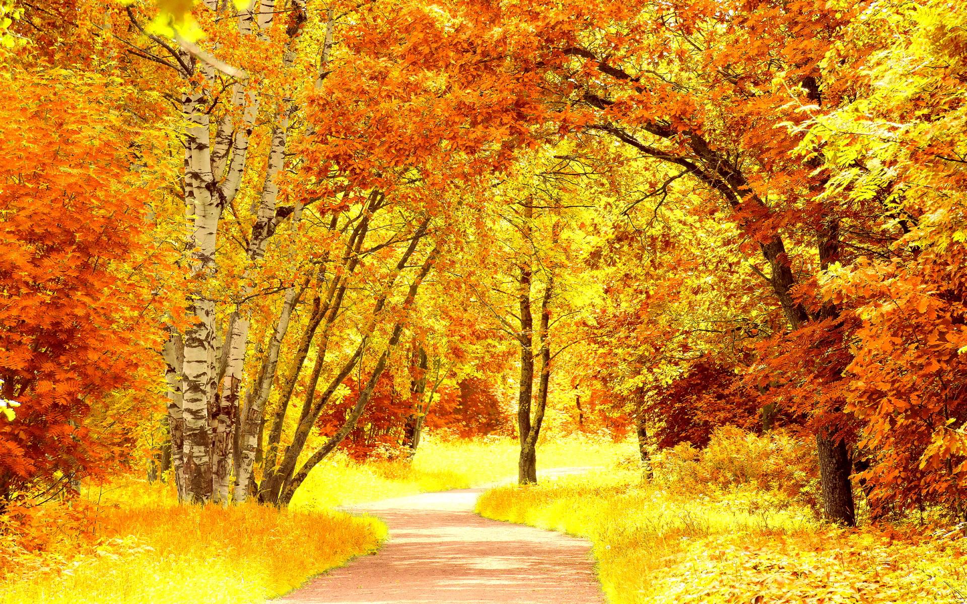 Red yellow autumn scenery