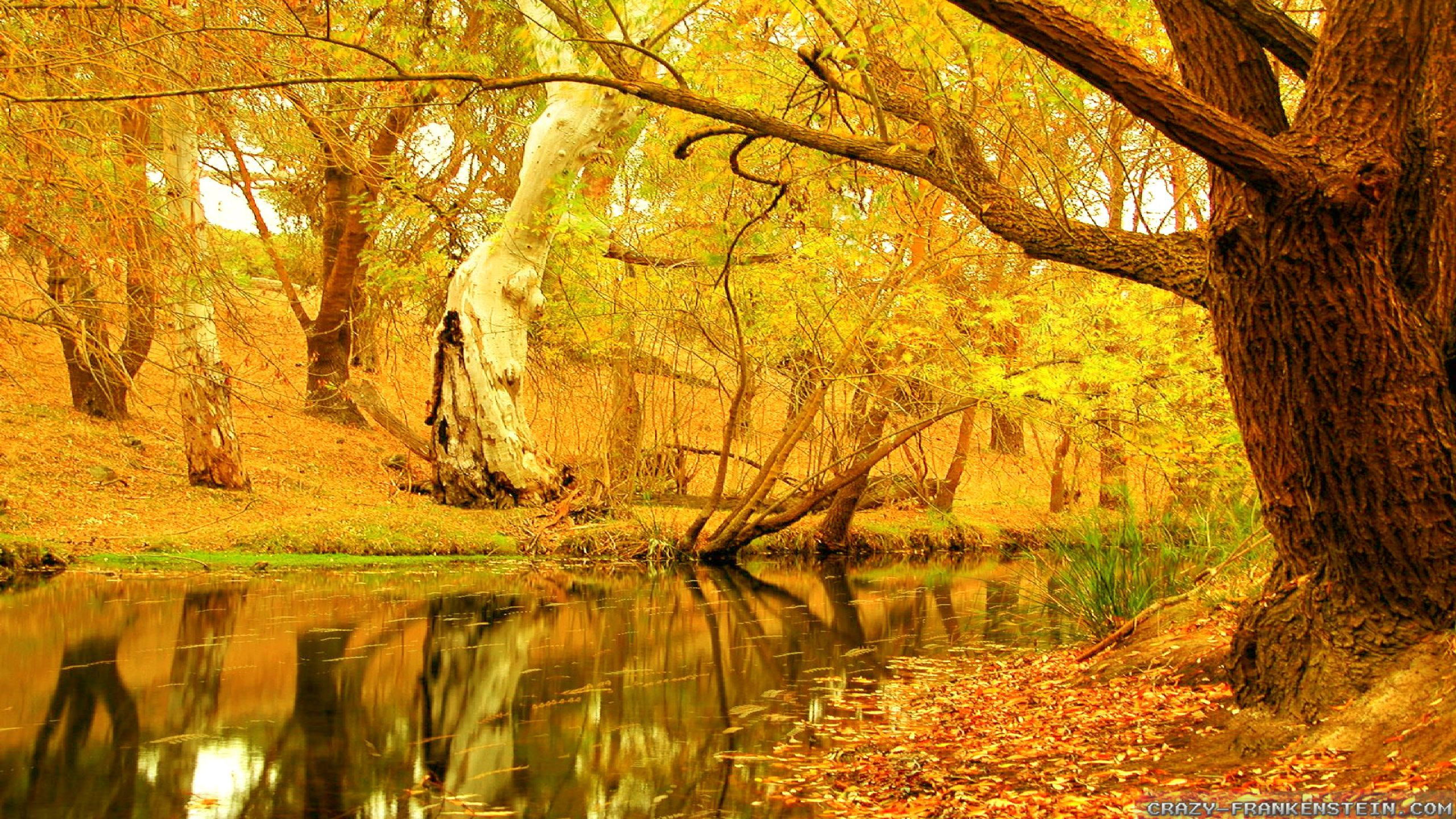 Autumn Trees Wallpapers Wide Widewallpapers
