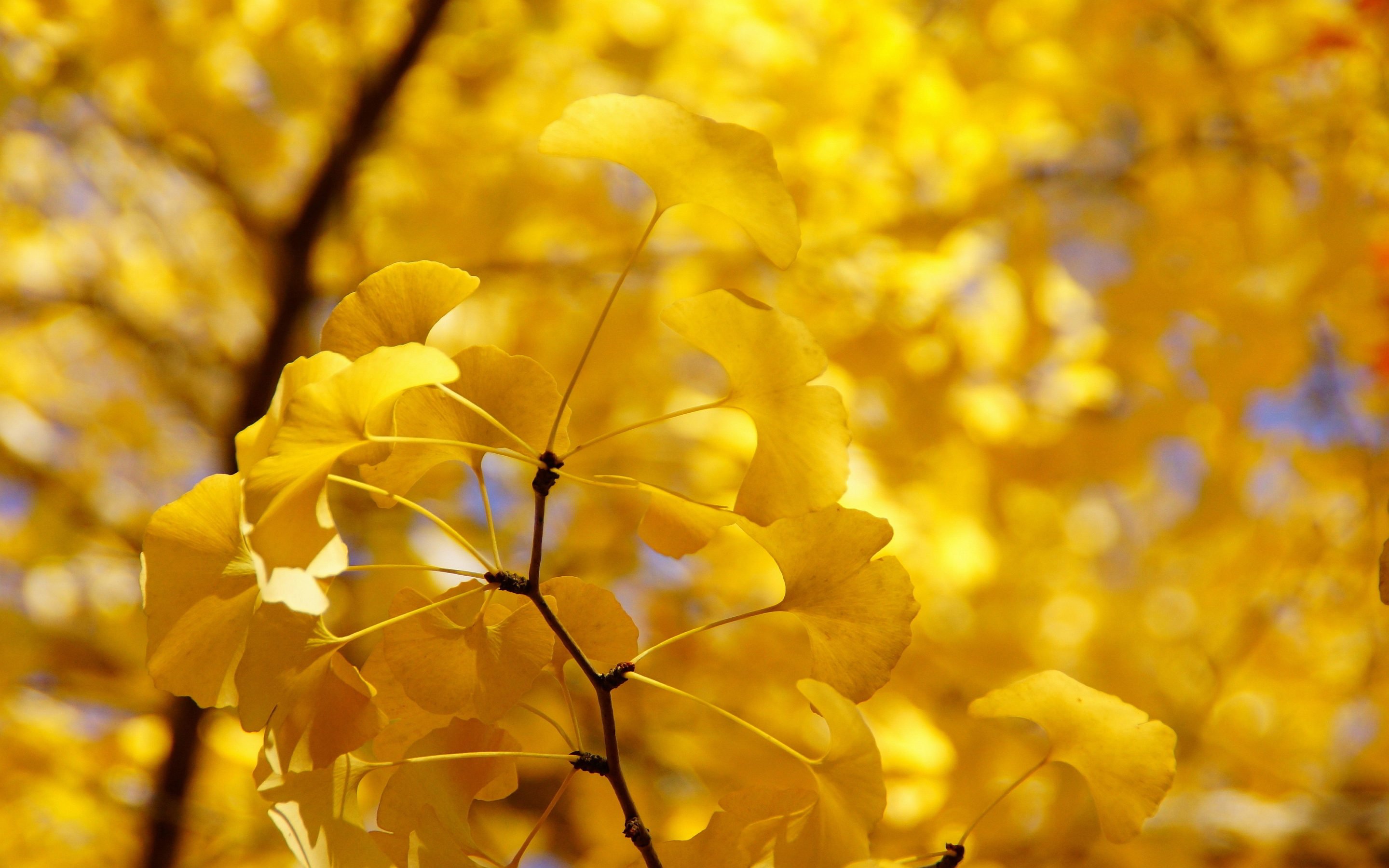 Yellow autumn twig