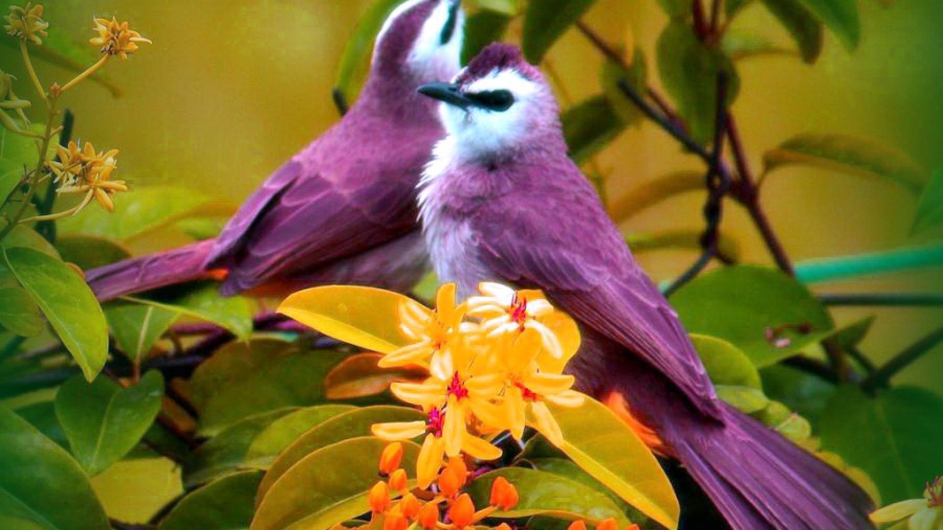 Birds leaves purple yellow flowers wallpaper