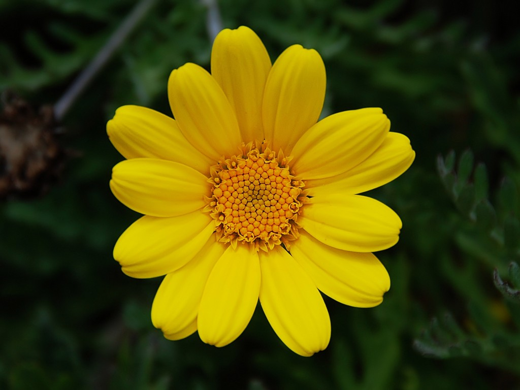 Yellow flower 1