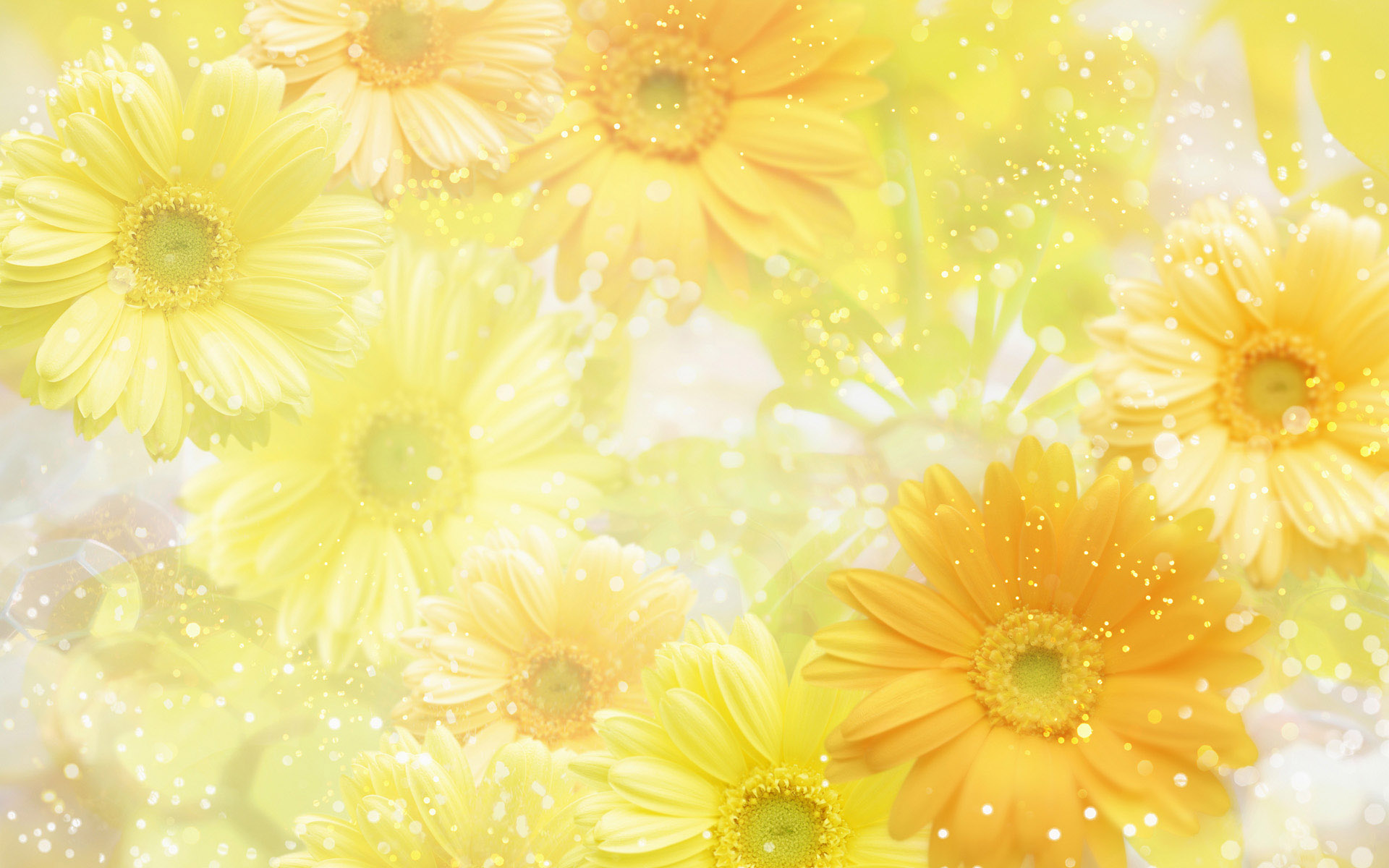 Yellow Flower Background Wallpaper 1920x1200 32589