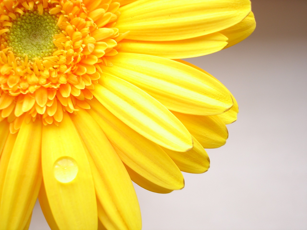 Sun Flower Wallpapers Yellow color flower wallpaper