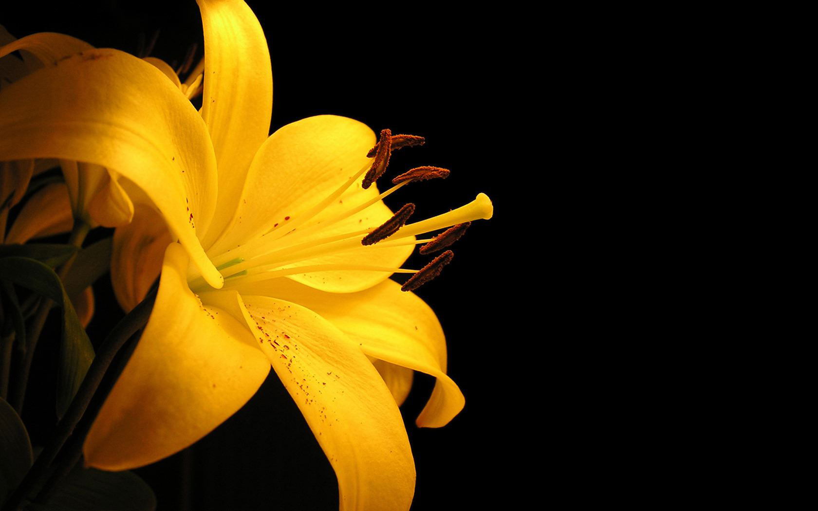 Yellow Flowers Best Quality Download High Resolution Amp Hd Wallpapers 1680x1050px
