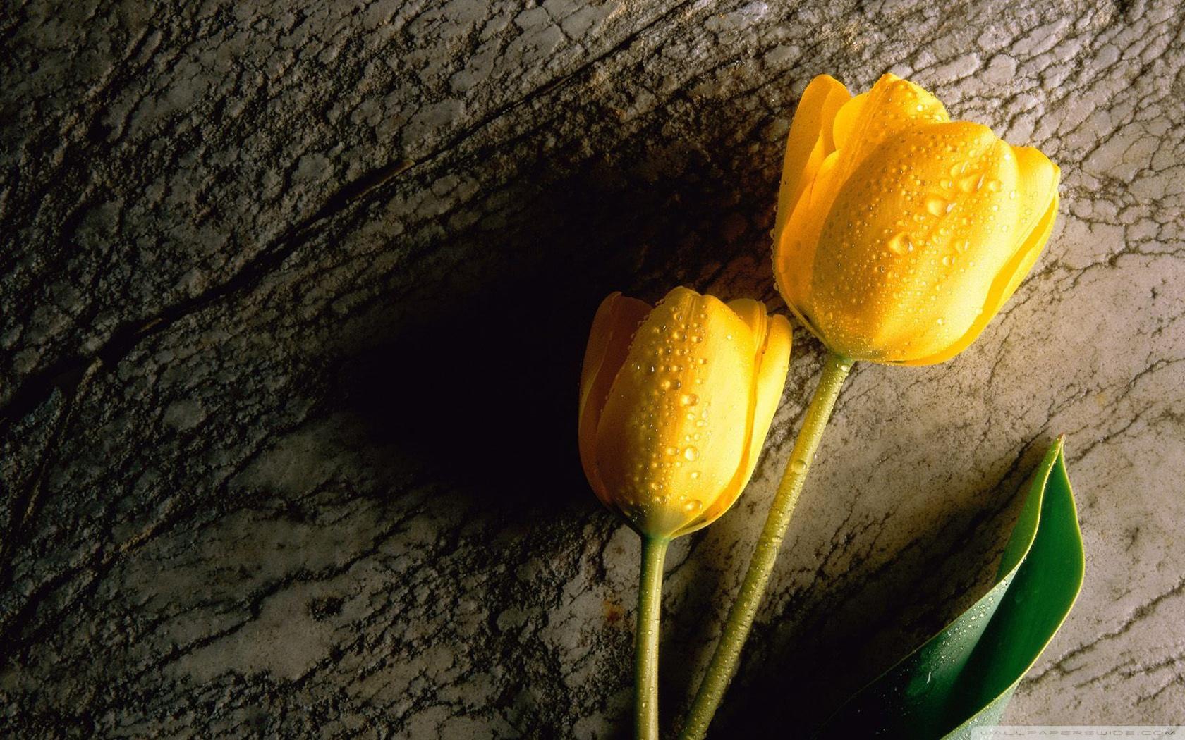 Flower Tumblr wallpaper | 1280x1024 | #42451