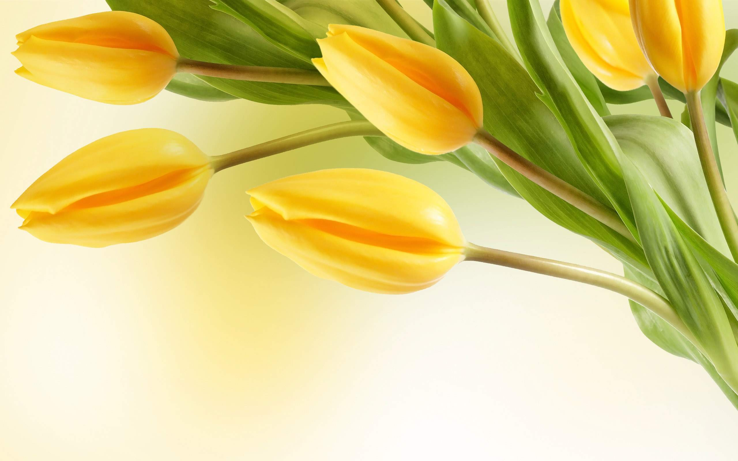 yellow mountain flowers wallpaper yellow tulip flower wallpaper-3