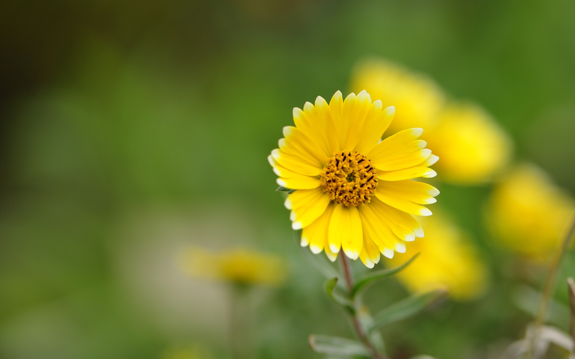 Yellow Flower Up Close · Yellow Flower Wallpaper HD ...