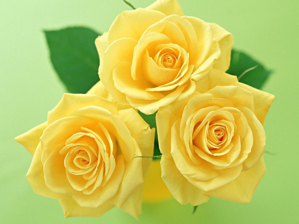 Yellow Flowers Images 32 HD Wallpapers