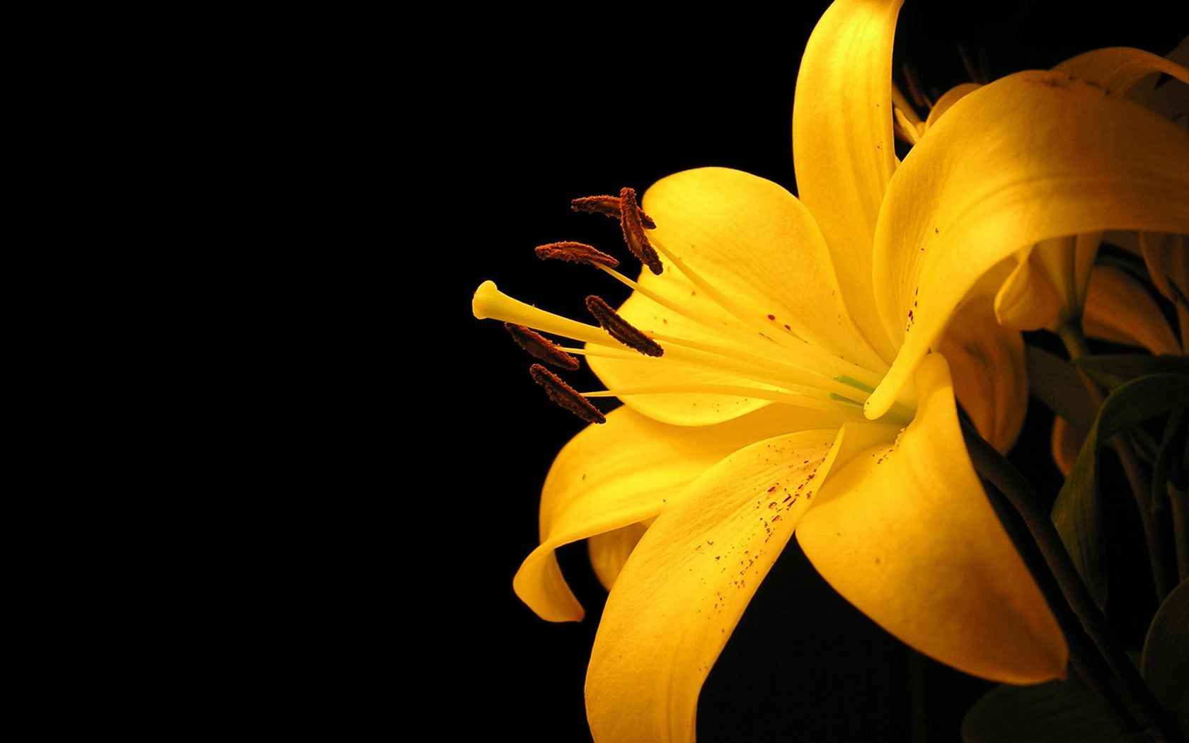 Yellow Flower Backgrounds
