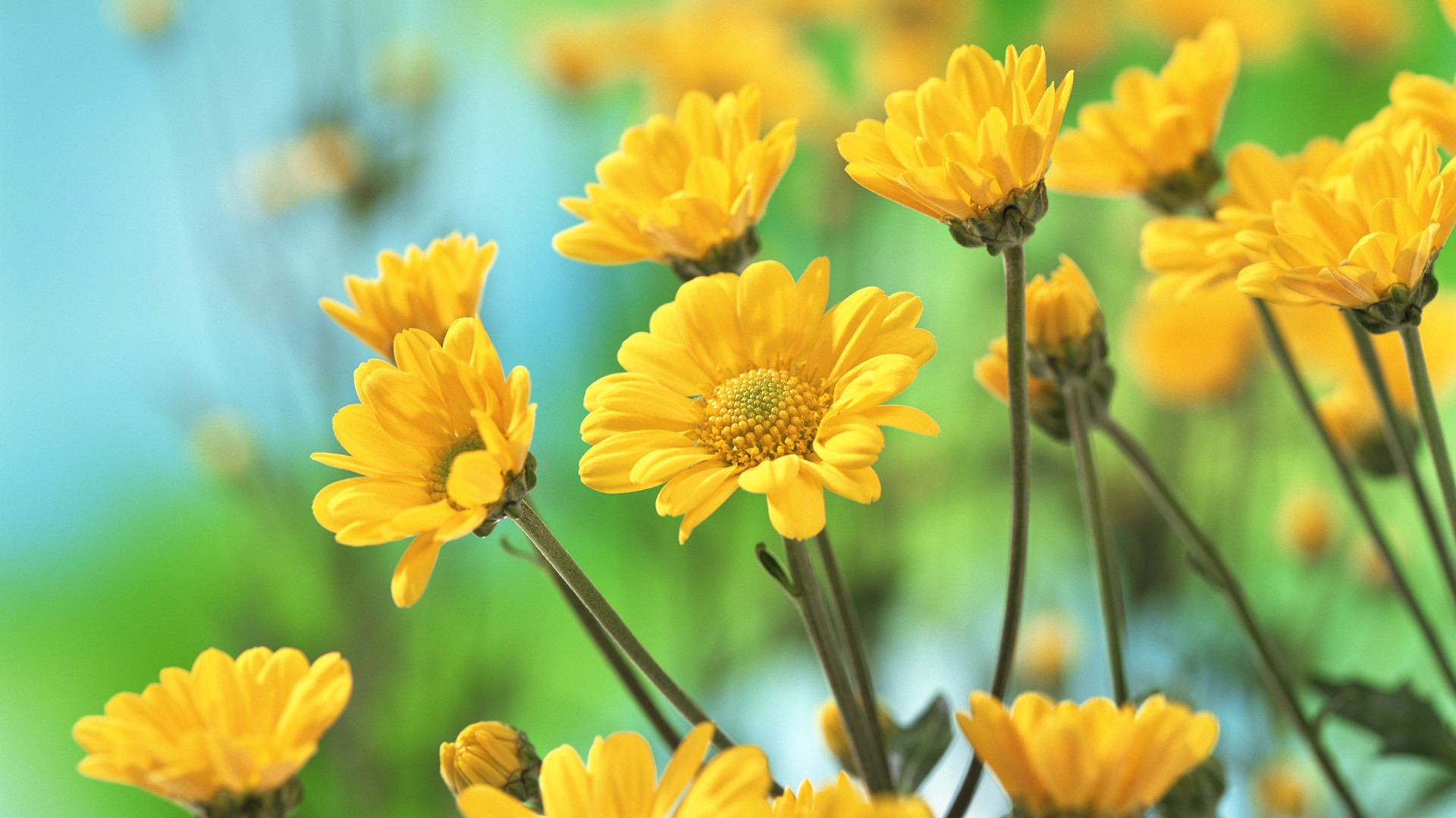 Yellow Flower Wallpaper