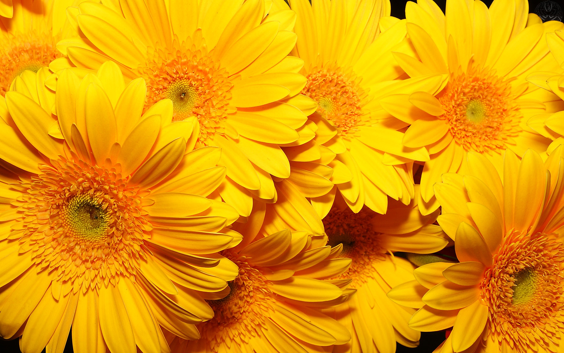 DOWNLOAD WALLPAPER Yellow Flowers - FULL SIZE ...