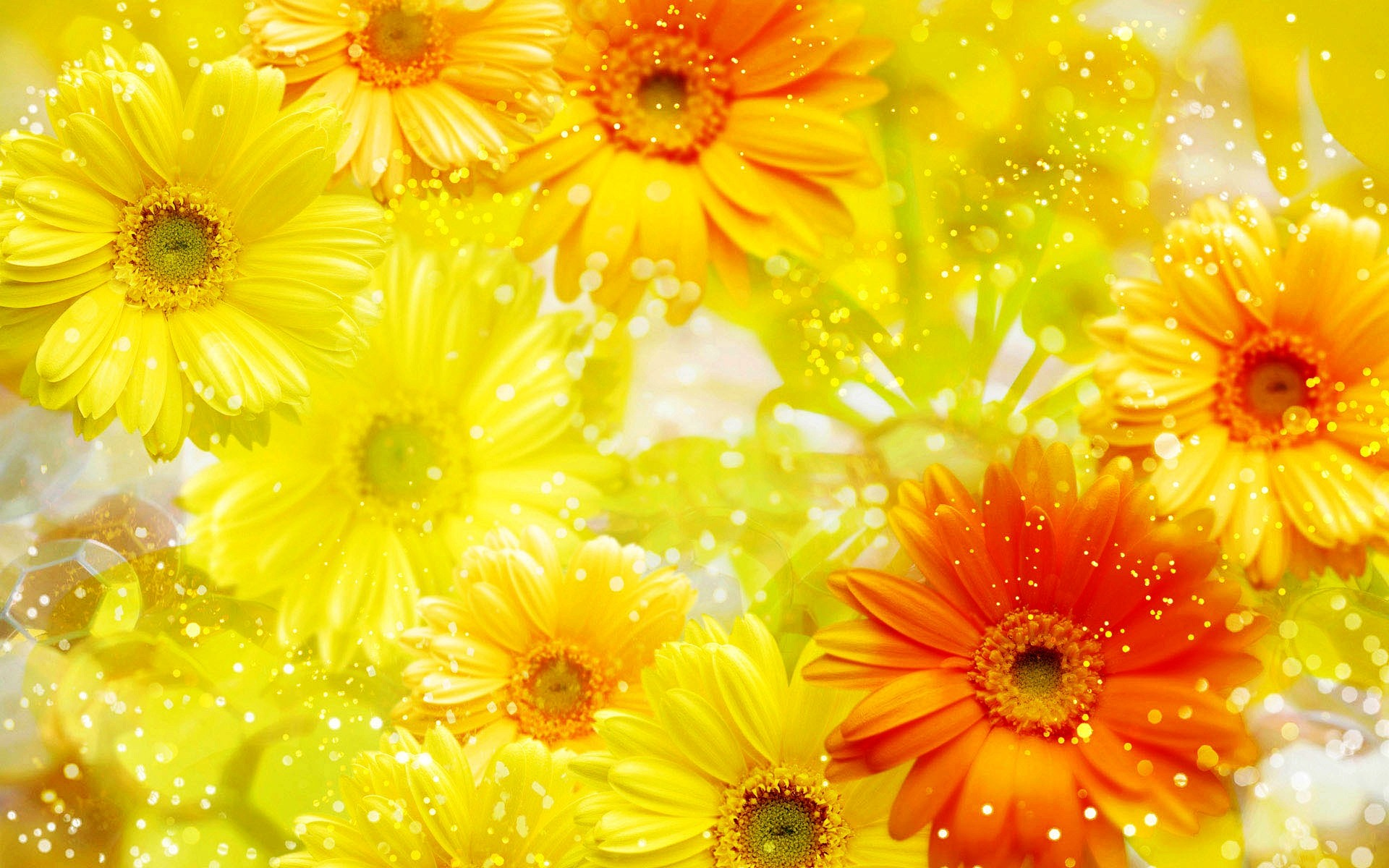 Yellow Flowers Background Wallpaper 1920x1200 23762