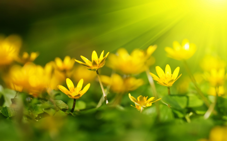 Yellow flowers sunshine