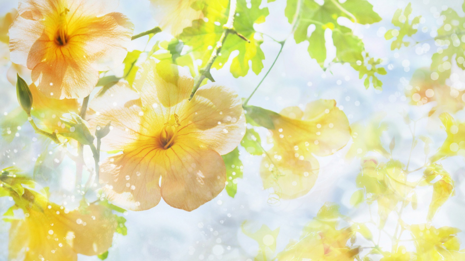 Yellow flowers sunshine hd