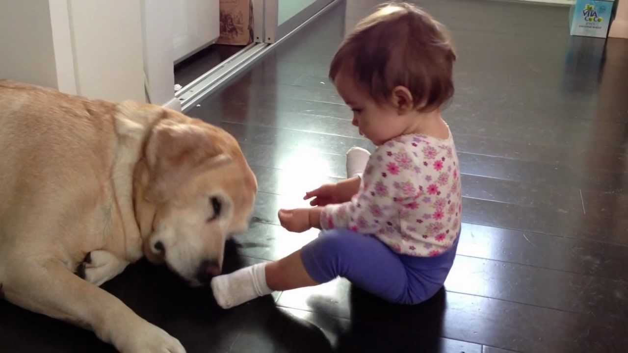 Baby girl plays with yellow Lab