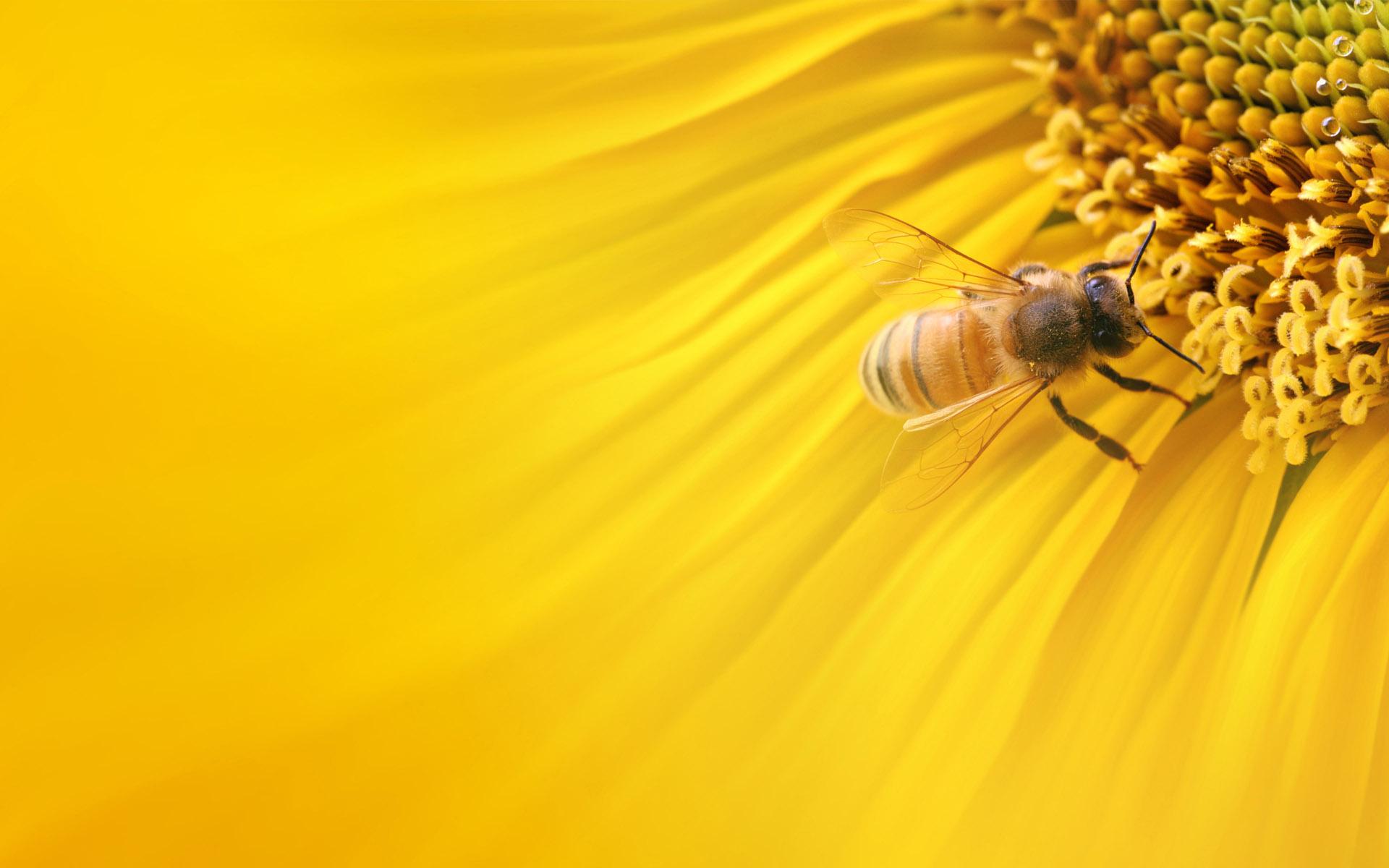 flowers macro bees yellow flower bee