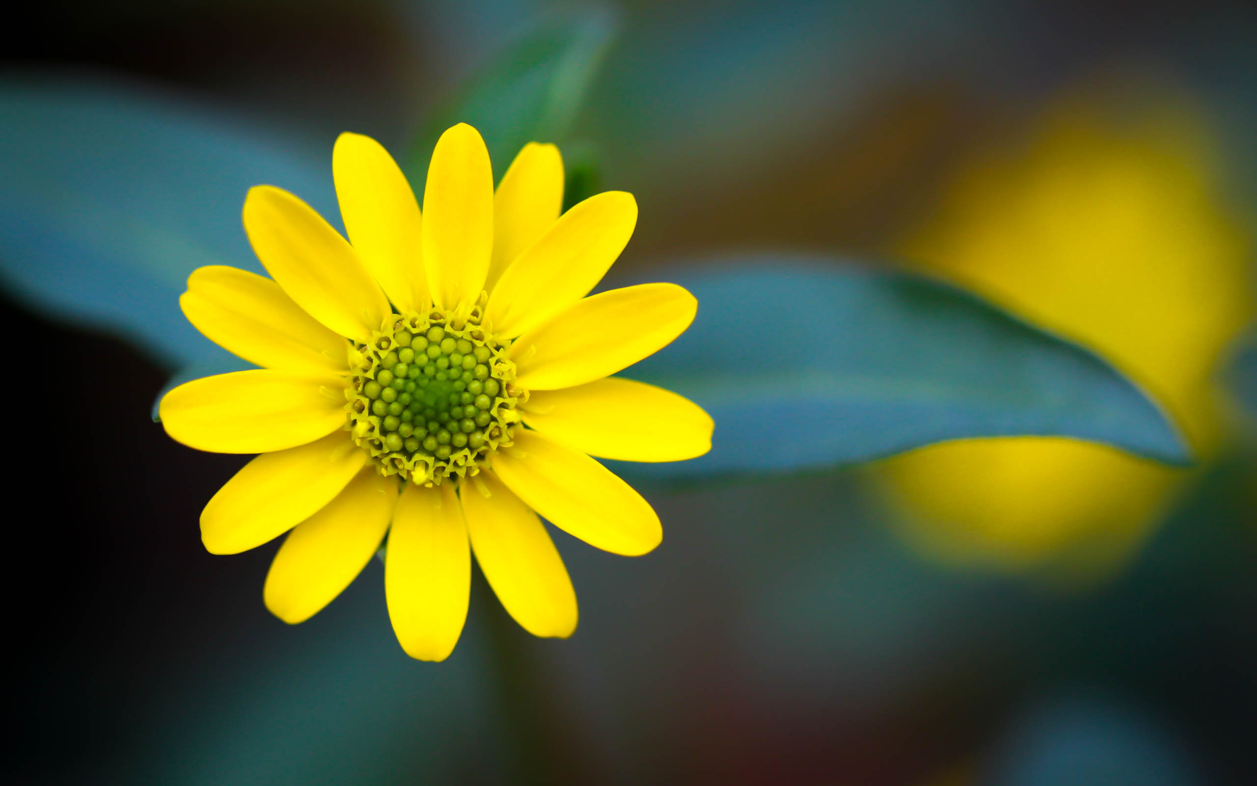 Yellow Macro HD wallpaper