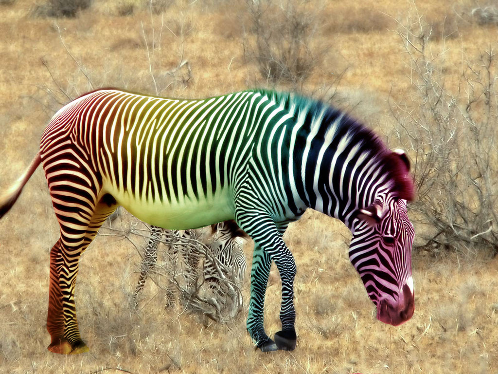 Zebra rainbow by YCanwood ...