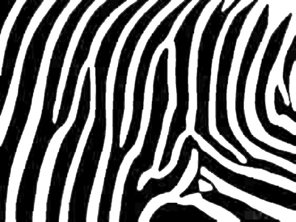 Zebra pink print. by Wild Wallpapers