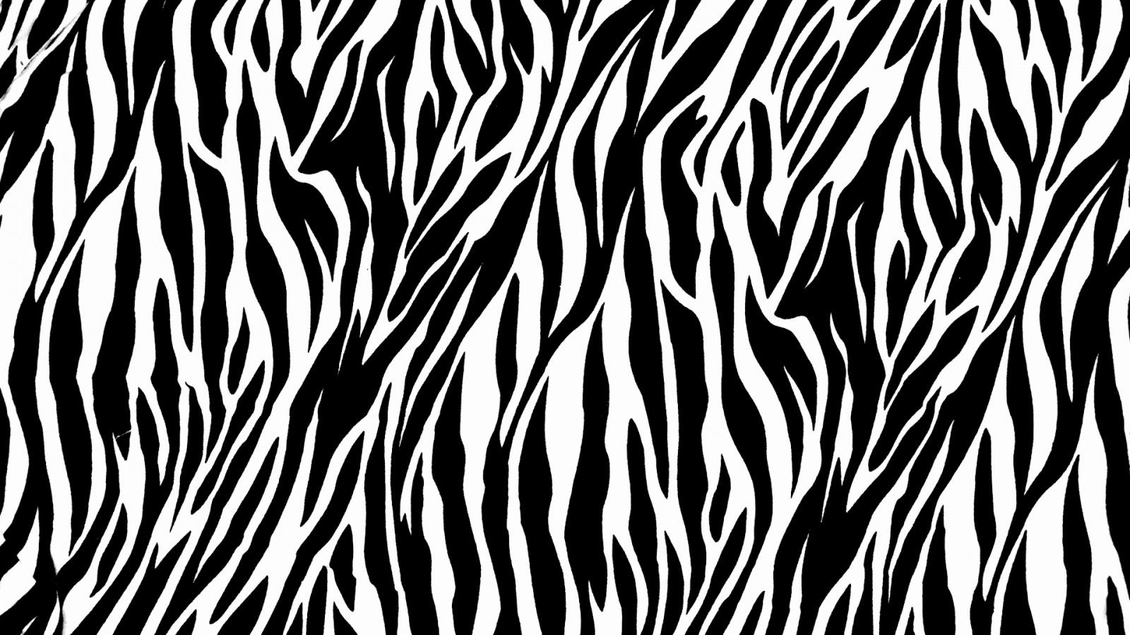Zebra Print Wallpaper Wallpaperkickcom 1600x900px