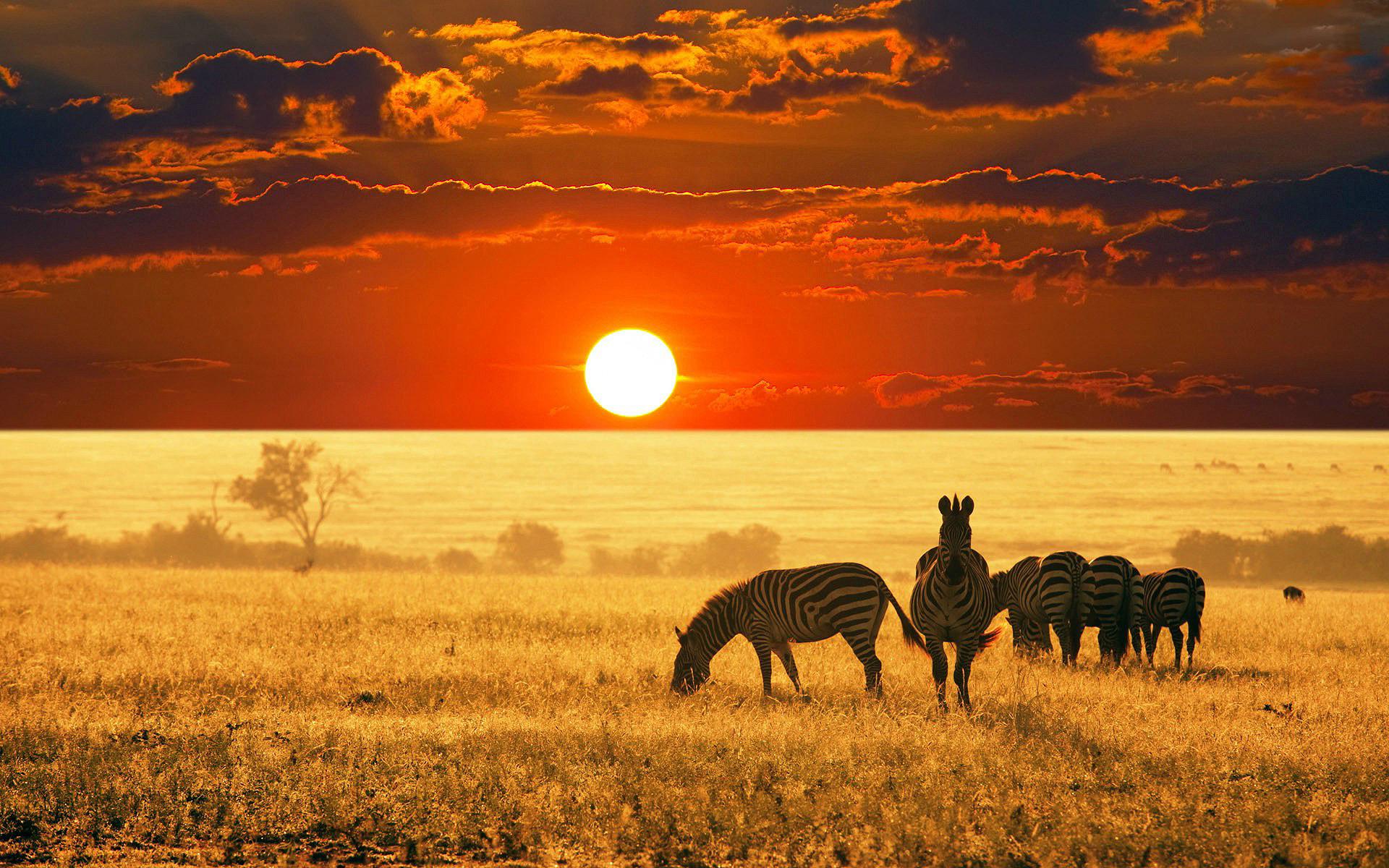 Zebras Sunrise Africa