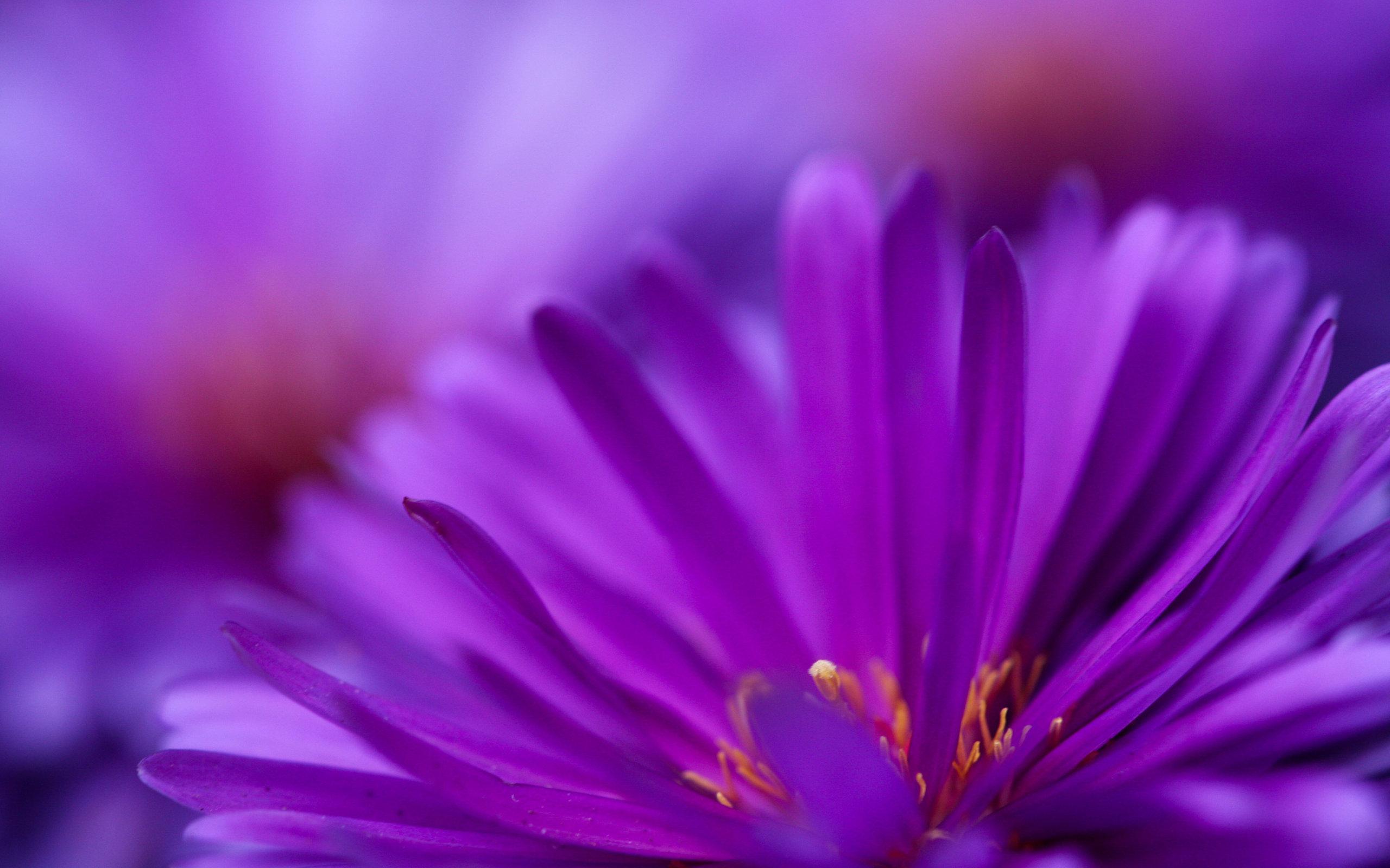 Zoom Purple Flower