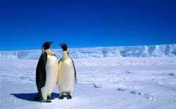 Adorable Antarctica Wallpaper