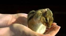 Adorable Chipmunk in Slow Motion